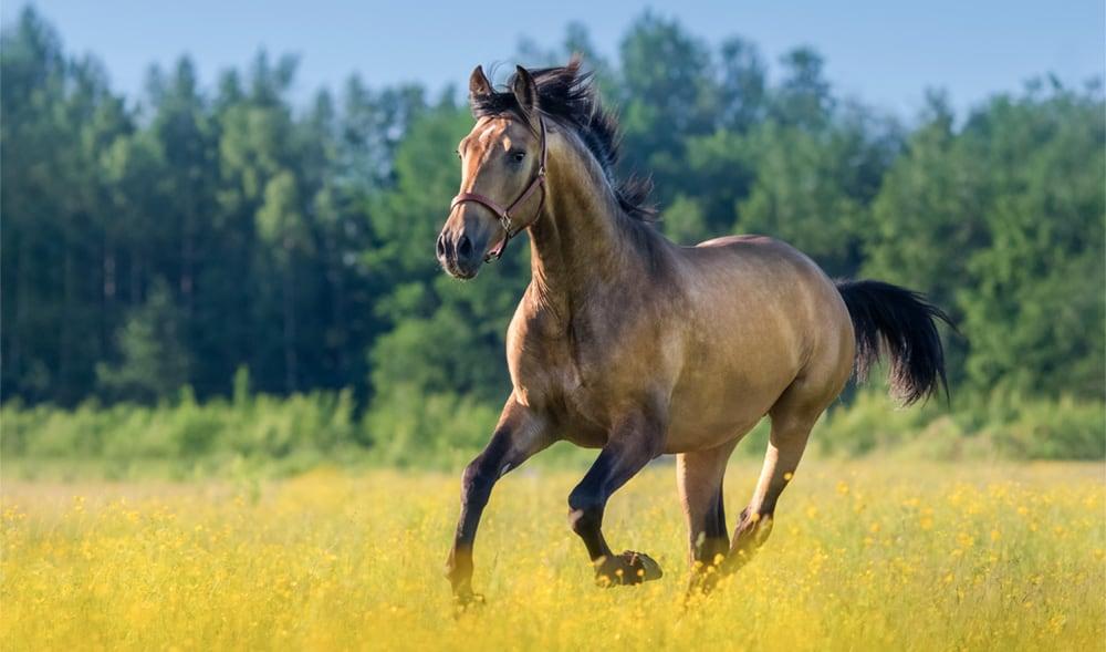 benefits of using massage guns on a horse